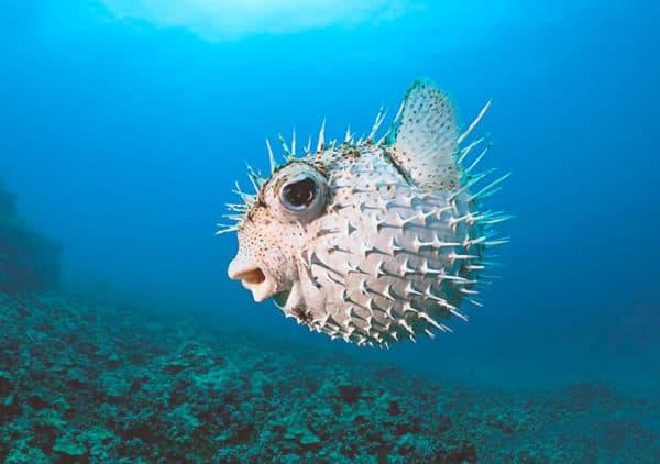 Интересные факты про морских ежей