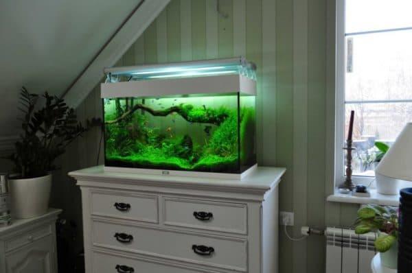 Интересные факты влияния аквариумных рыбок на здоровье человека