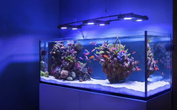 Как обустроить морской аквариум