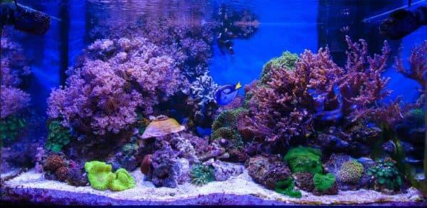 Как сделать морскую воду для аквариума читайте статью