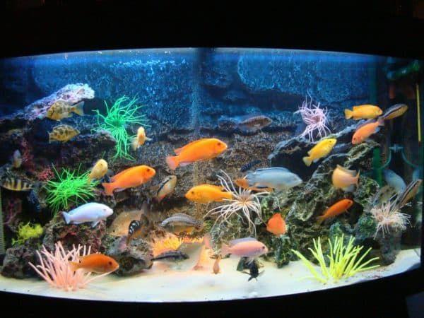 Как вычислить объем аквариума в литрах читайте статью