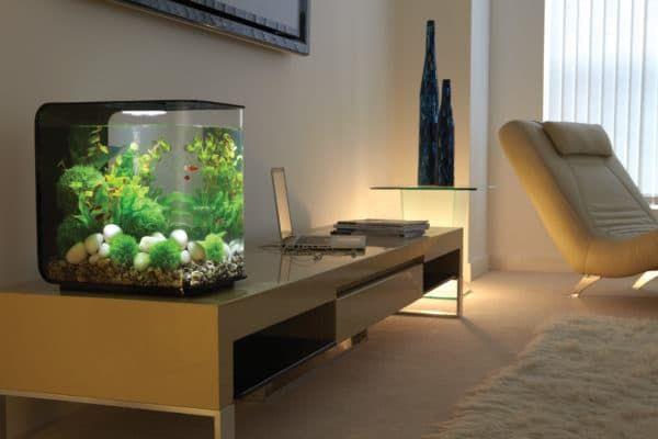 Какой вред может принести домашний аквариум