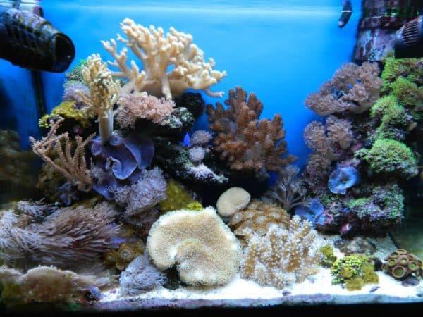 Морской аквариум в домашних условиях читайте статью