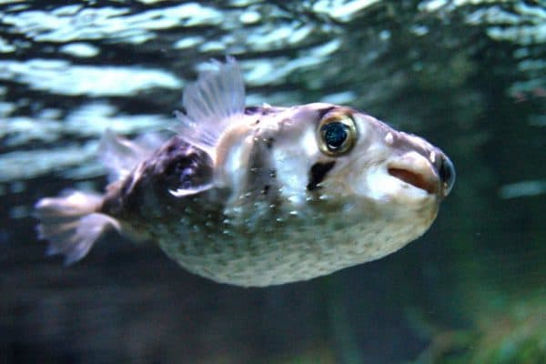 Морской еж фото
