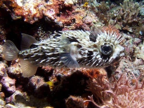 Морской еж на фото