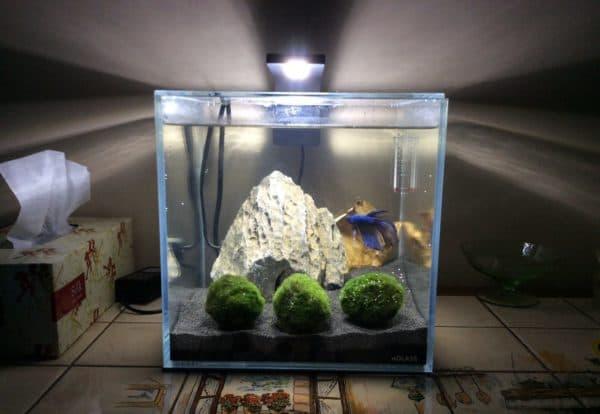 На 10 литров аквариум