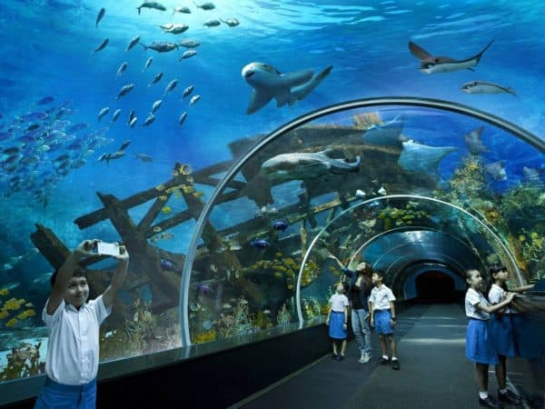 Океанариумы S.E.A.Aquarium (Сингапур)