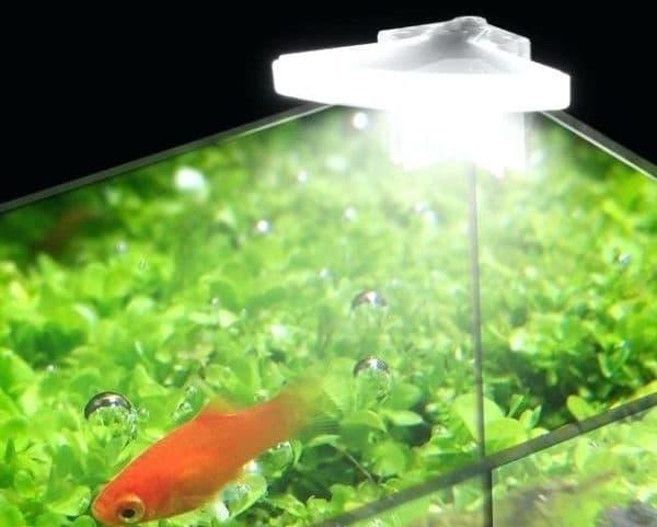 Освещение в аквариуме против водорослей