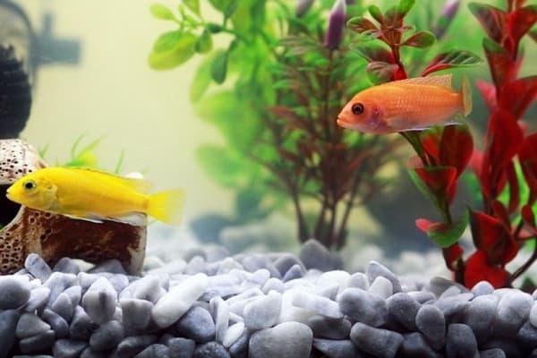 Перекись водорода в аквариум что будет