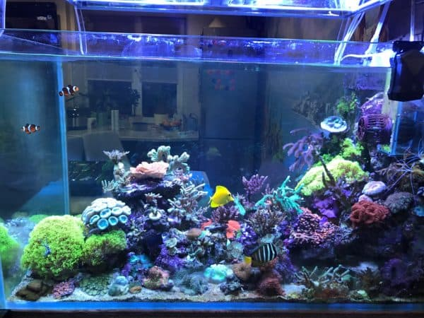 Подготовка воды для морского аквариума