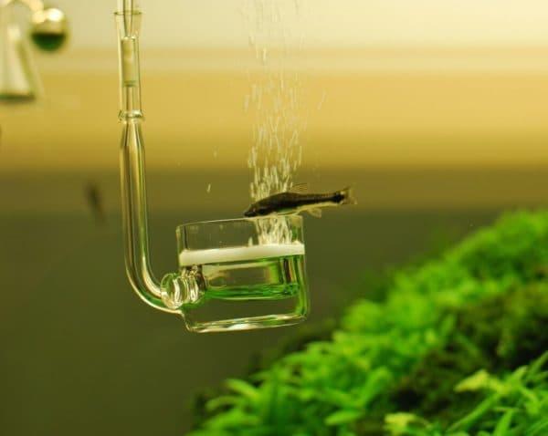 Углекислый газ в аквариуме