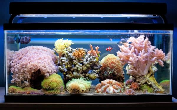 Заселение обитателей в морской аквариум